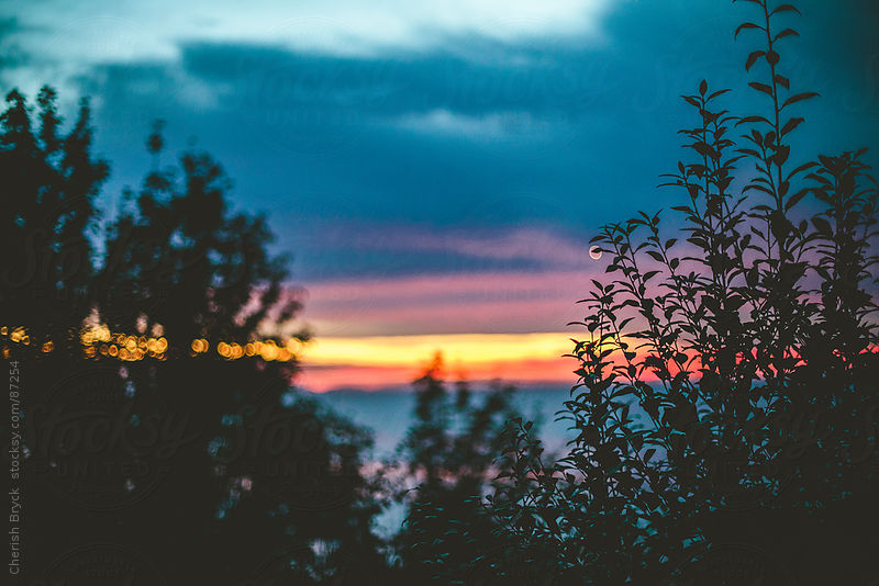 Sunset through the trees. by Cherish Bryck