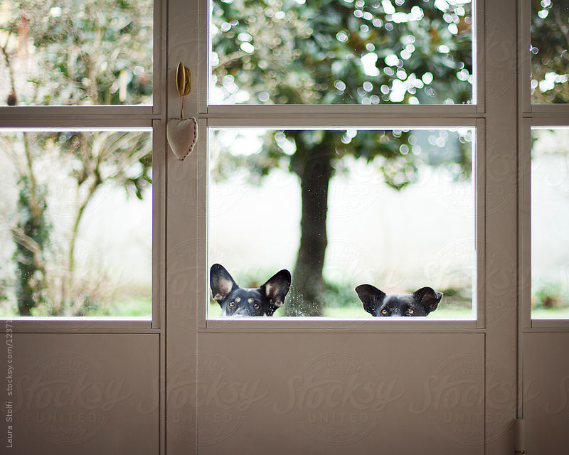 Dogs peeking inside and waiting for the door to be opened by Laura Stolfi