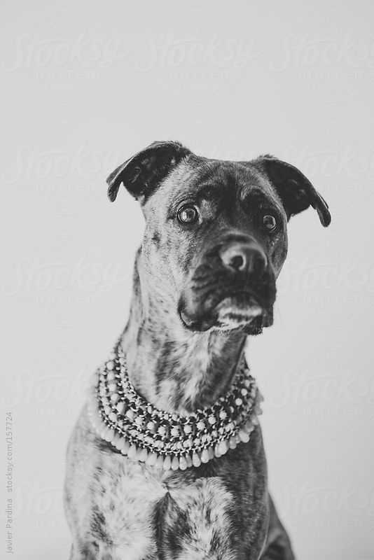 a fashion dog with pendant by Javier Pardina
