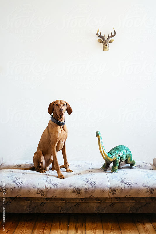 Beautiful Magyar Vizsla sitting next to toy dinosaur. by Ivar Teunissen