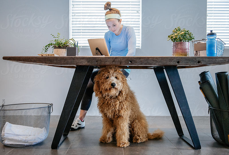 Dog accompanies his owner to work by Carl Slifka