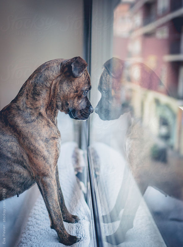 Dog looking out the window. by Eva Plevier