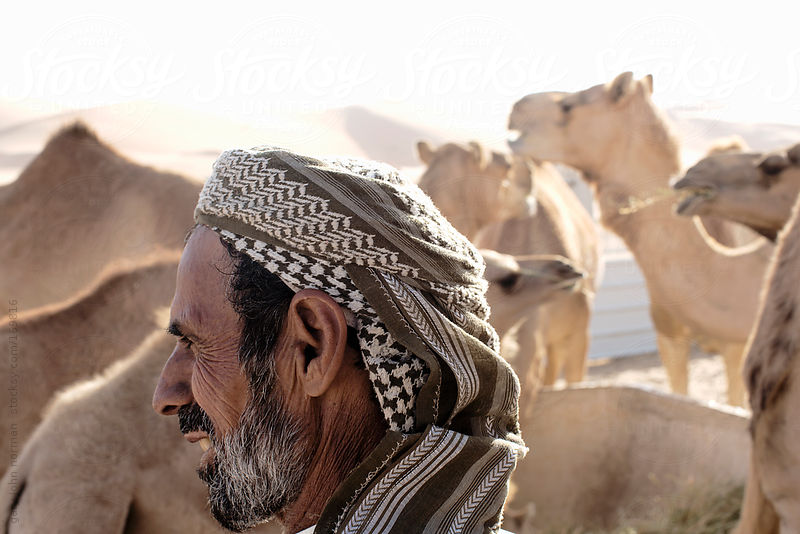 camel herder with his camels by Gary John Norman