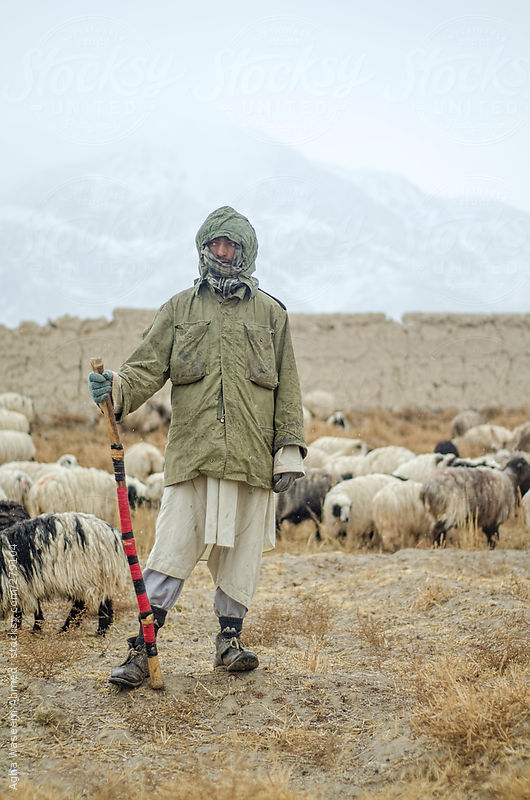 A shepherd standing with a stick in his hands guarding his sheep by Agha Waseem Ahmed