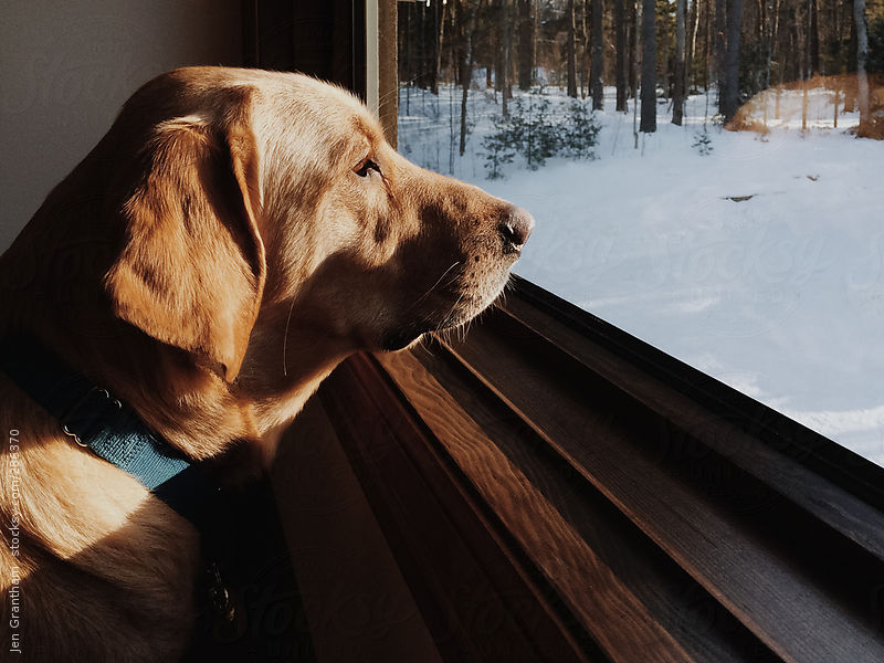 Dog looking out window in winter by Jen Grantham