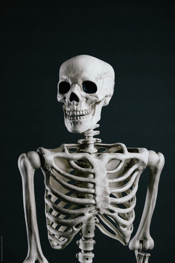 Portrait of a Halloween skeleton