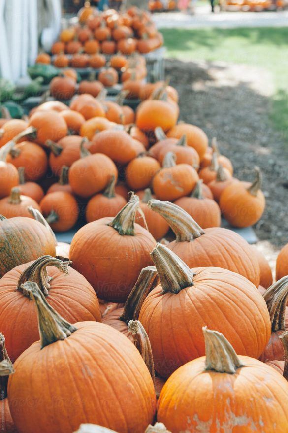 Autumn stock photo of pumpkins for sale at a farm